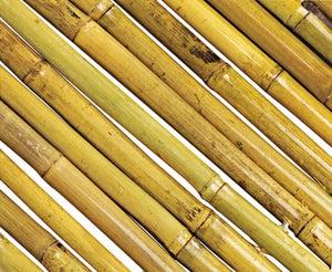 Tuteur Bambou Droit Nortene H295 M