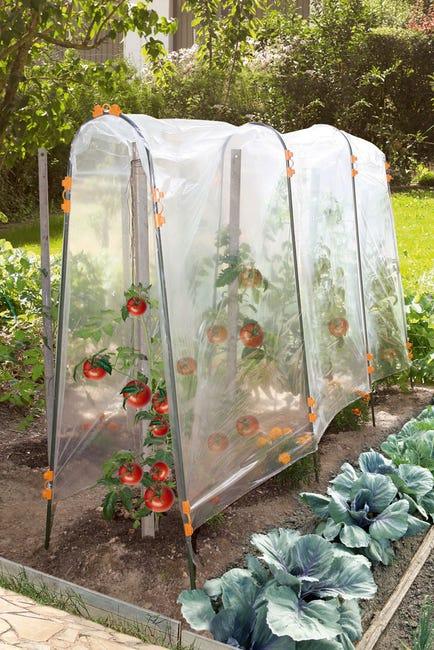 Film De Forcage Tomate Nortene 3 X 3 5 M Leroy Merlin