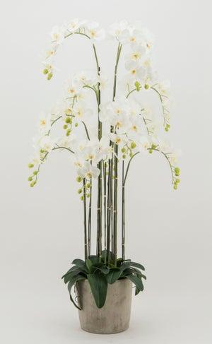 Orchidée blanche artificielle géante 13 branches - pot ciment - H150 cm