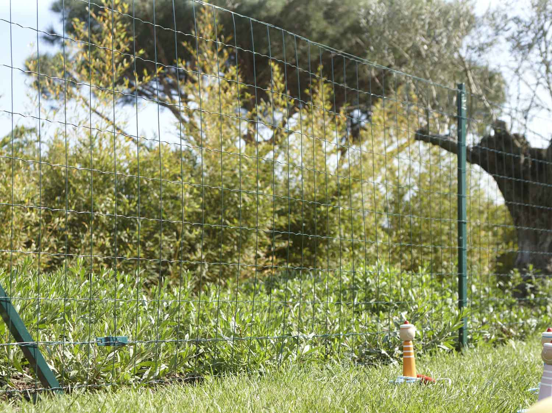 Grillage Jardin Hauteur 2M comment choisir son grillage ? | leroy merlin