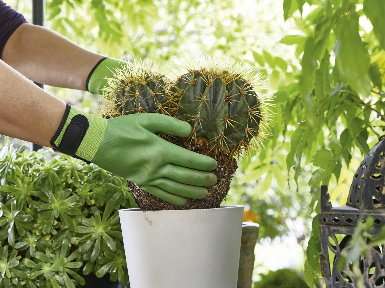 Trouver Un Jardinier A Domicile tout savoir sur la protection du jardinier   leroy merlin