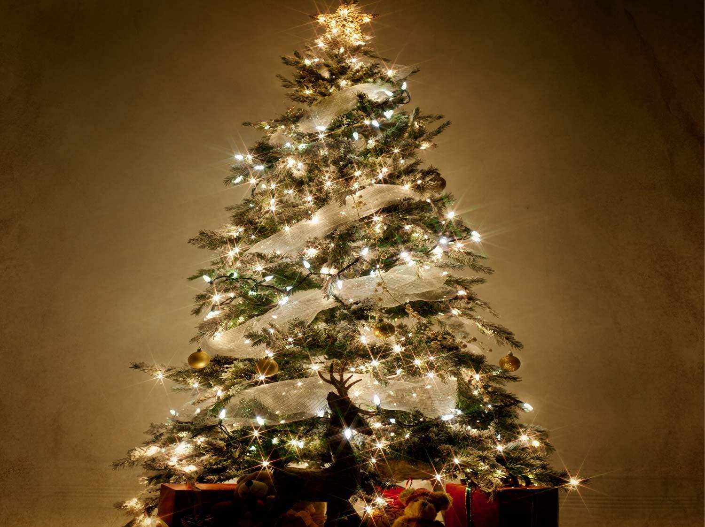 Comment choisir son sapin de Noël ? | Leroy Merlin