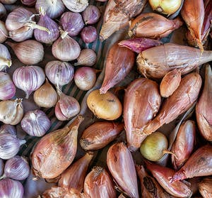 Que planter en octobre au jardin et au potager ? | Leroy Merlin