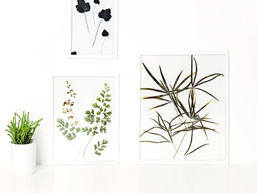 DIY : créer des herbiers sous verre